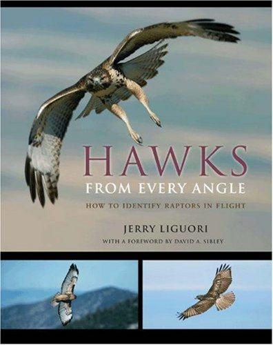 Hawks from Every Angle by Jerry Liguori