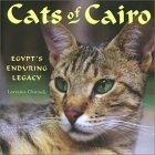Cats of Cairo: Egypt's Enduring Legacy