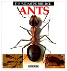 The Fascinating World of Ants