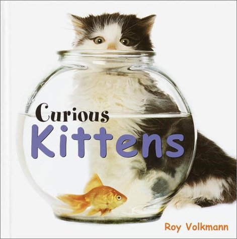 Curious Kittens by Roy Volkmann