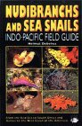 Nudibranchs And Sea Snails