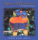 Special Wonders of Our Feathered Friends