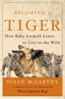 Becoming a Tiger : How Baby Animals Learn to Live in the Wild
