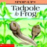 Tadpole To Frog (Play With)