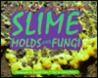 Nature Close Up: Slime Molds & Fungi