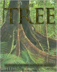 The Tree by Jenny Linford