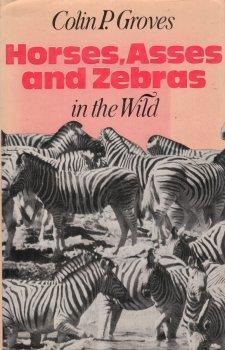 horses-asses-and-zebras-in-the-wild