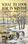 What To Look For In Winter (National)