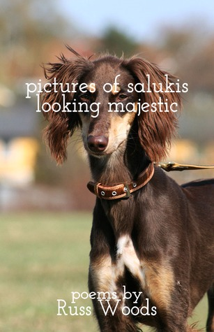 Pictures of Salukis Looking Majestic by Sara June Woods