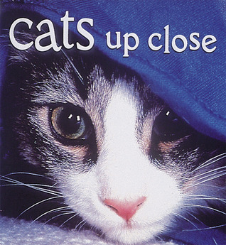 Cats Up Close by Vicki Constantine Croke