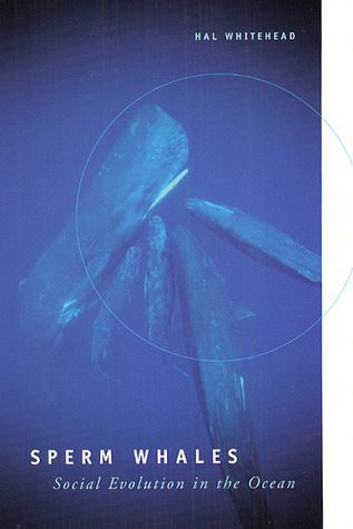 Sperm Whales: Social Evolution in the Ocean