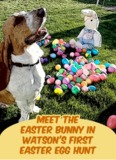 Meet The Easter Bunny In Watson's First Easter Egg Hunt (Easter Stories For Children)