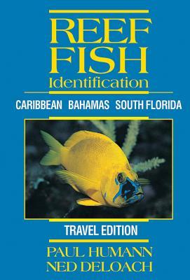 Reef Fish Identification: Caribbean Bahamas South Florida