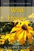 Wild Honey (Book Two of The Brady Boe Series)