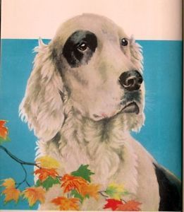 Raff:  The Story of an English Setter