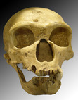 Human Origins—Explorations and Discussions in Anthropology, Biology, Archaeology, and Geology