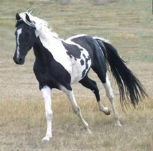 Horse Luver