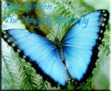 Ebook Only You, Butterfly read Online!