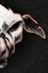 Ebook Six Dead Spots read Online!