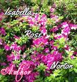 [Isabella Rose Norton] ½ Justice for Jenna (Boardan High #2)  [architecture PDF] Read Online ↠´ bitcoinshirts.co
