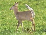 Bambi Davis