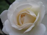 Christina Rose Andrews