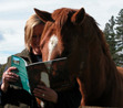 Ebook Ripple and the Wild Horses of White Cloud Station read Online!