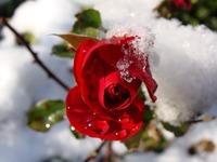 Virina Winter