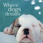 Where Dogs Dream