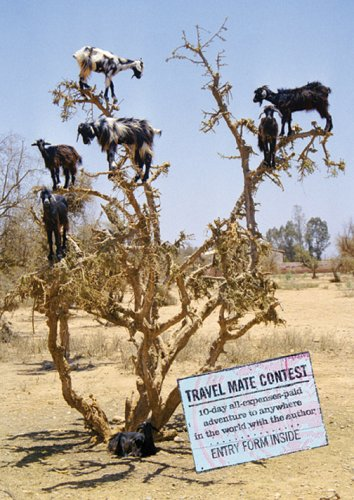 Goat Trees: Tales from the Other Side of the World