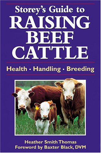 Guide to Raising Beef Cattle