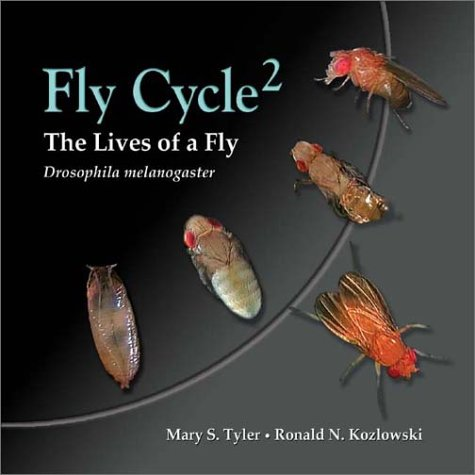 Flycycle 2: Lives of a Fly