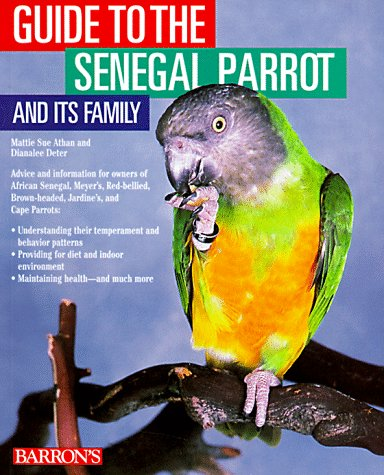 guide-to-the-senegal-parrot-and-it-s-family