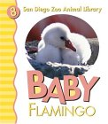 Baby Flamingo San Diego Zoo by Patricia A. Pingry