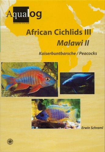Aqualog African Cichlids III, Malawi II - Peacocks