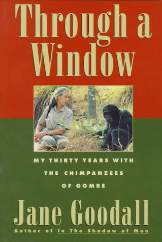 through a window comparison of chimpanzees