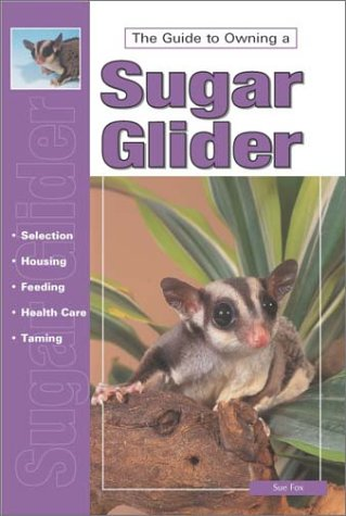 The Guide to Owning a Sugar Glider