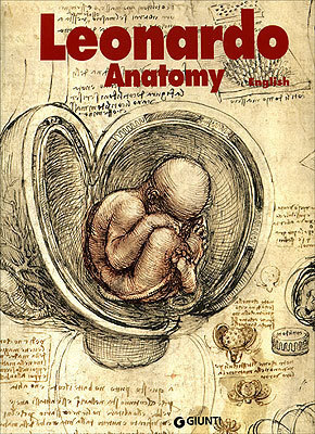 Leonardo Da Vinci Anatomy Of The Human Body
