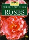 Peter Schneider on Roses