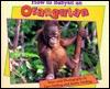 how-to-babysit-an-orangutan