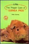 Proper Care Guinea Pigs
