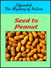 seed-to-peanut