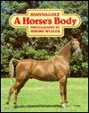 A Horse's Body