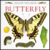 Butterfly by Mary Ling