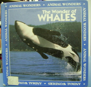 The Wonder of Whales