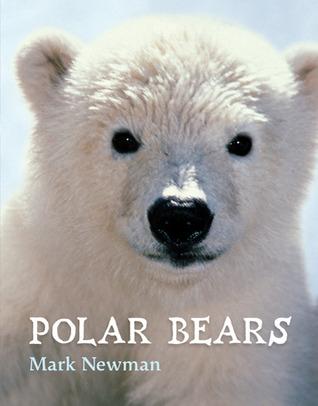 10150655 polar bears by mark newman