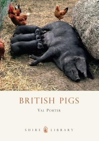 british-pigs