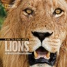 Face to Face with Lions