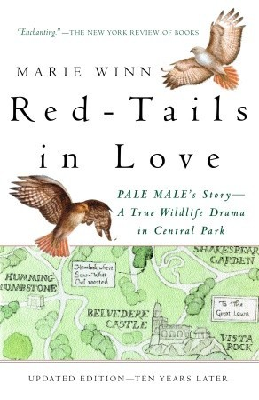 Red-tails in love : Pale Male's story--a true wildlife drama in Central Park