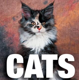 Cats by Caterina Gromis di Trana